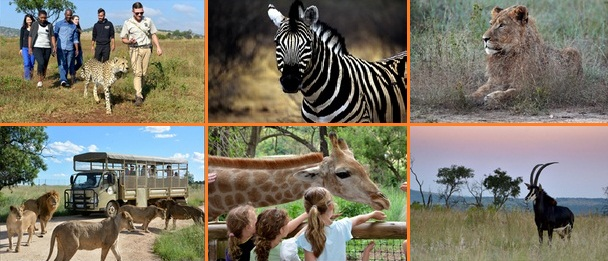 SA Lion and Safari park