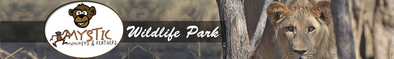 Logo and header of the Mystic Monkeys and Feathers Wildlife ranch