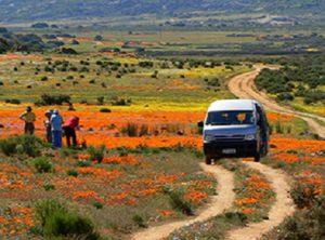 Landscape Tours flower fields