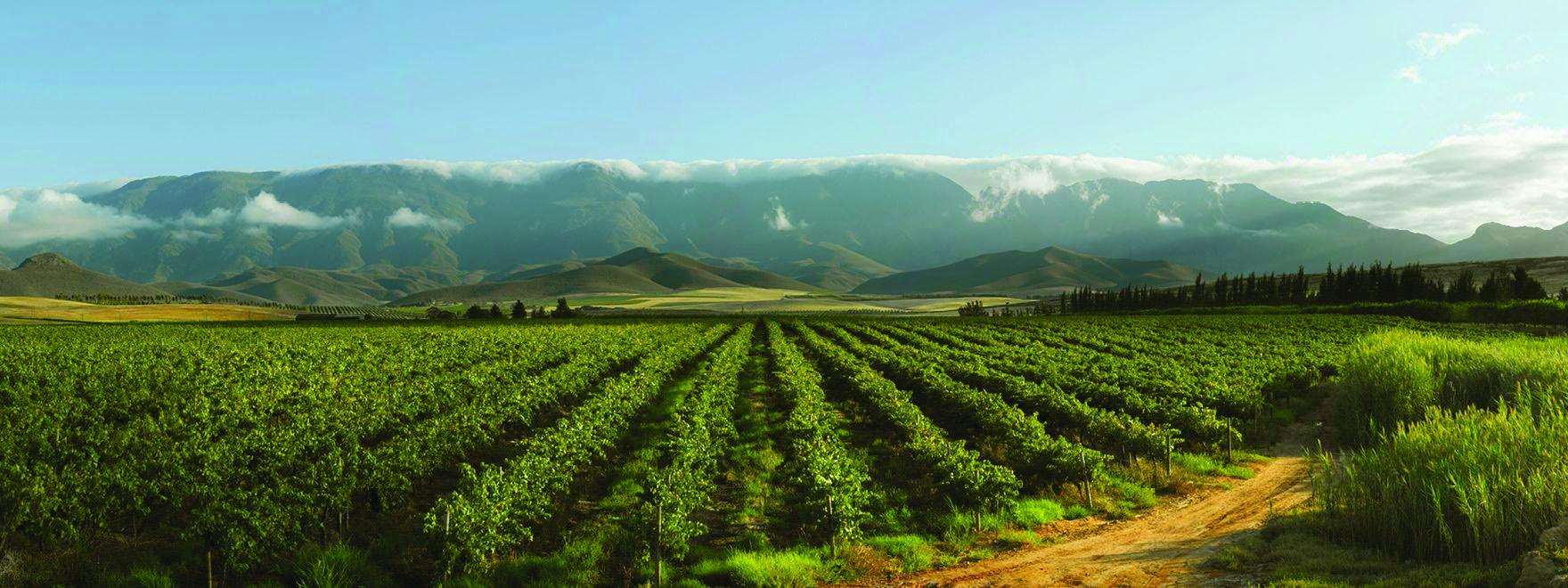 Bonnievale Wines vineyard