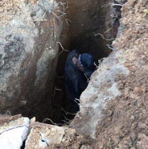 cape drain man fixing pipe
