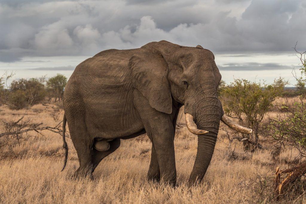 FCT - Elephant