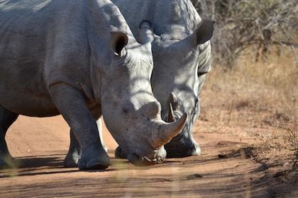 FCT - Rhino