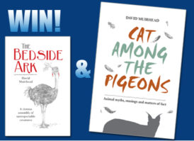 WIN cat among the pigeons