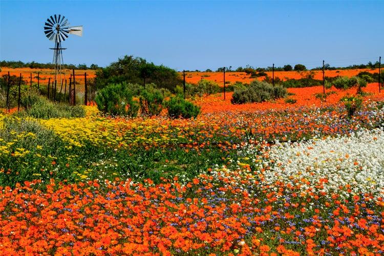Travel - Wild Flowers