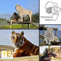 Panthera 2019