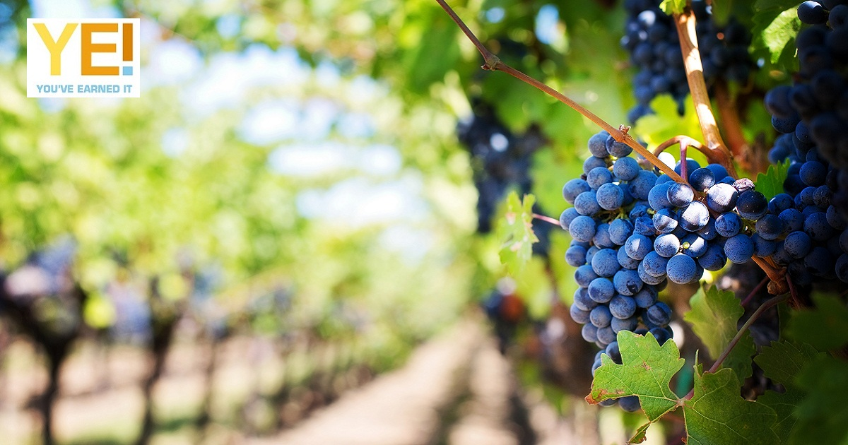 Wineries in the western cape