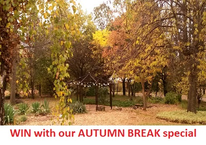 woodlands retreat autumn