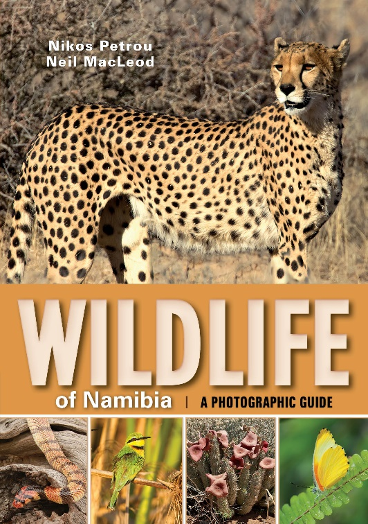 Wildlife in Namibia